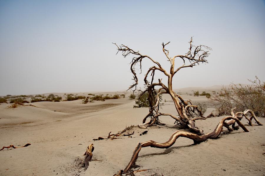 Californie - Death Valley NP